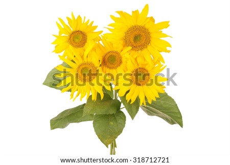Beautiful bouquet of yellow sunflowers five flowers isolated on white - stock photo