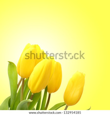 Beautiful bouquet of yellow tulips on a yellow background - stock photo