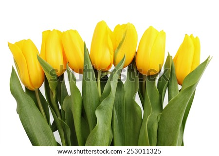 beautiful bouquet of yellow tulips on white background - stock photo