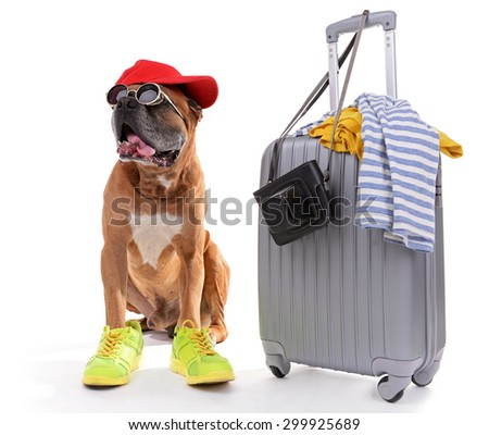 Beautiful Boxer Dog with suitcase isolated on white