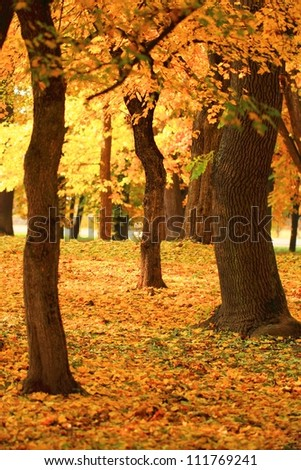 beautiful branch of an autumn tree in a forest - stock photo