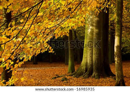 Beautiful branch of an autumn tree in a forest