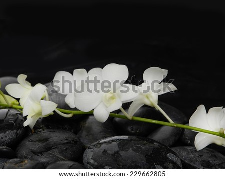 beautiful branch white orchid on wet back stones background - stock photo