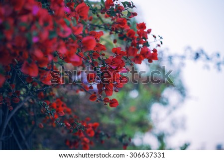 Beautiful Branch with red flowers in the Gothic style - stock photo