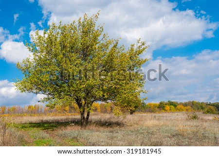 Beautiful branchy wild apricot tree against blue cloudy sky at autumnal season