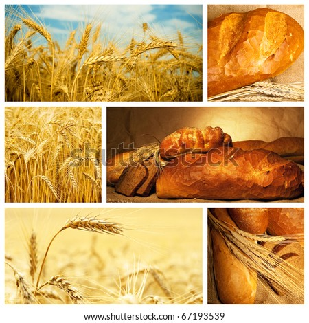 Beautiful bread and wheat collage - stock photo