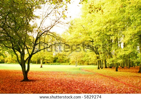Beautiful bright autumn scenery of a path leading into a peaceful park.