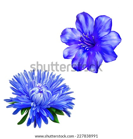 Beautiful bright blue Flower. Isolated on white.  Spring flower.Isolated on white background. Aster. Blue flower, Spring flower.   - stock photo