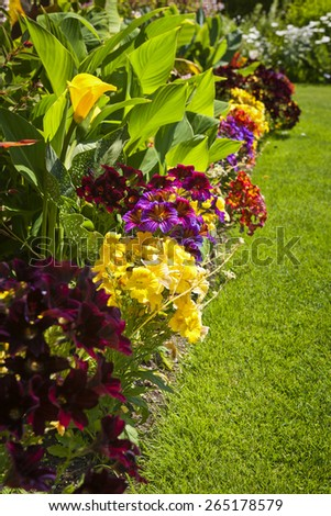 Beautiful bright colorful flower garden with various flowers - stock photo