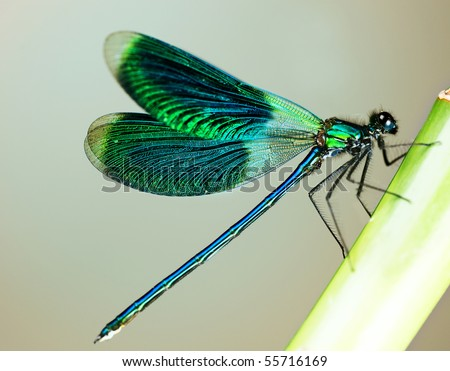 Beautiful bright Dragonfly - stock photo
