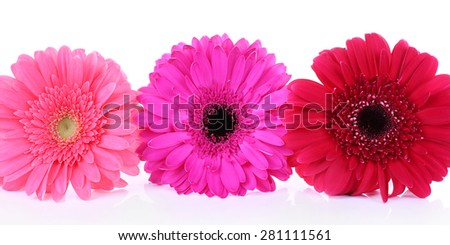 Beautiful bright gerbera isolated on white