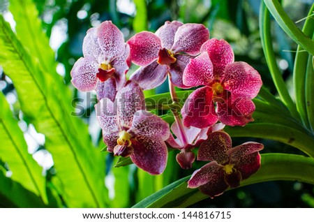 Beautiful bright orchid flowers in Botanical garden , close-up details - stock photo