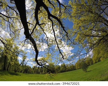 Beautiful, bright summer landscape - the wood behind a meadow and branches of trees in the foreground - stock photo
