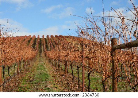 Beautiful, bright, sunny November day in an Oregon vineyard - stock photo