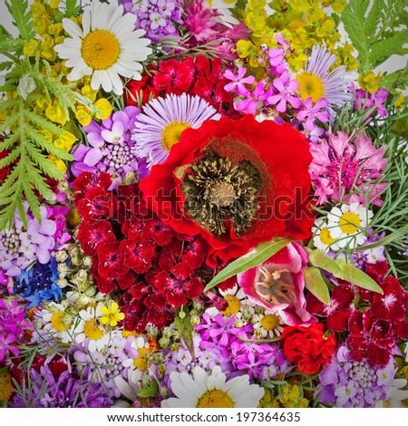 Beautiful Bright Wild flowers bouquet background. Cornflower, camomile, carnation, hand bell, poppy - stock photo