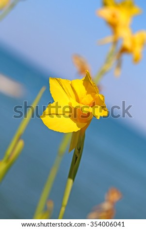 Beautiful bright yellow flower photographed close up - stock photo