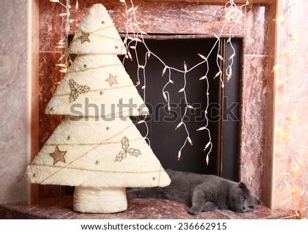 beautiful British cat at a New Year tree  - stock photo