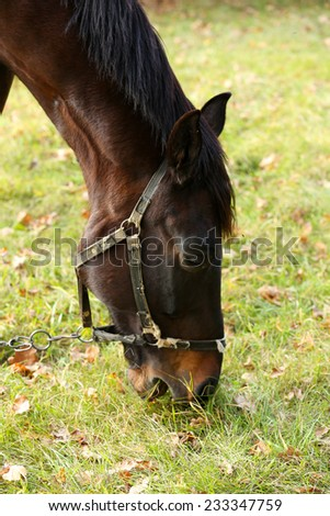 Beautiful brown horse in pasture