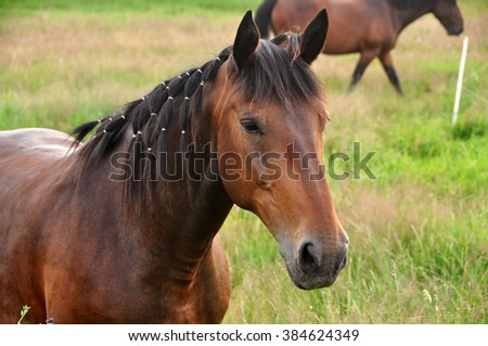 Beautiful brown horse nature