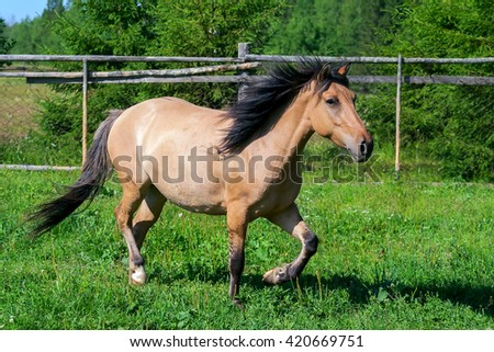 Beautiful brown horse on pasture in the summer - stock photo