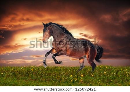 Beautiful brown horse running gallop - stock photo