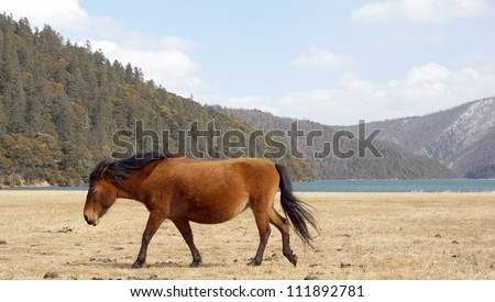 horse walking side view