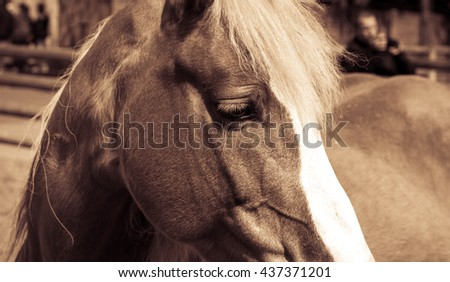 Beautiful brown horse with white arrow and mane in sepia. Close up - stock photo