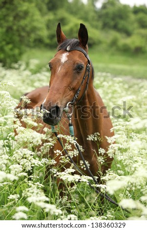 Beautiful brown mare with bridle in white flowers