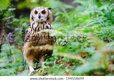 Beautiful brown owl hidden in the forest. Surrounded by colorful plants - stock photo