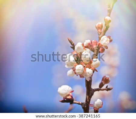 Beautiful buds - budding, awakening nature - stock photo