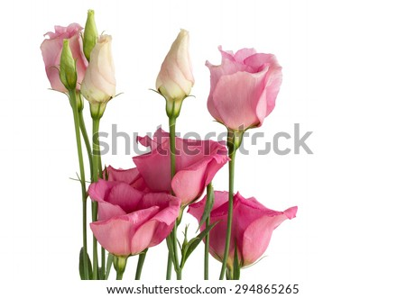 Beautiful bunch of pink lisianthus flowers on white
