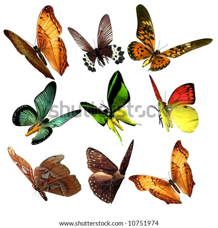 Beautiful Butterflies isolated - stock photo