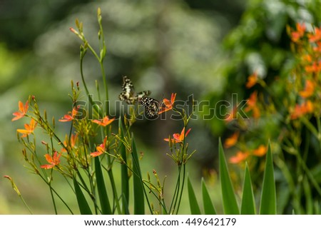 Beautiful butterfly and lovely flower on natural light background in the morning. - stock photo