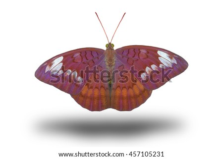 butterfly stretch stock photos images  pictures
