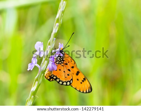 Beautiful butterfly in the meadow