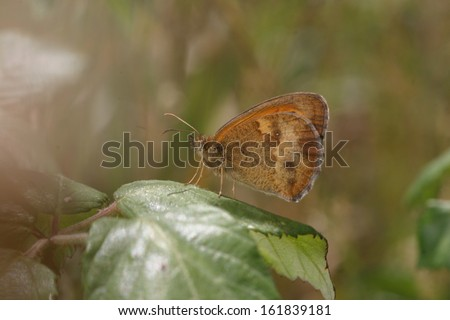 beautiful butterfly, nature and wildlife photo - stock photo