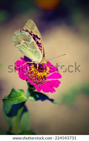 Beautiful butterfly on a flower. vintage style - stock photo