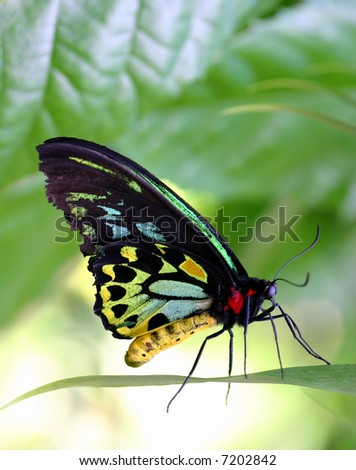 Beautiful butterfly on a leaf - stock photo