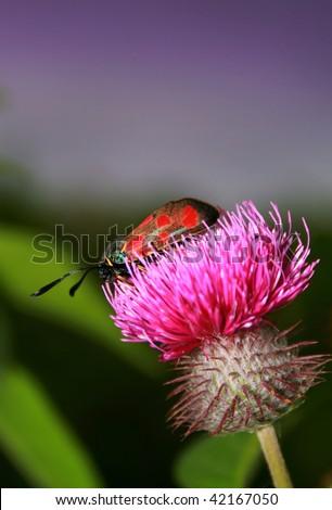 beautiful butterfly on flower - stock photo