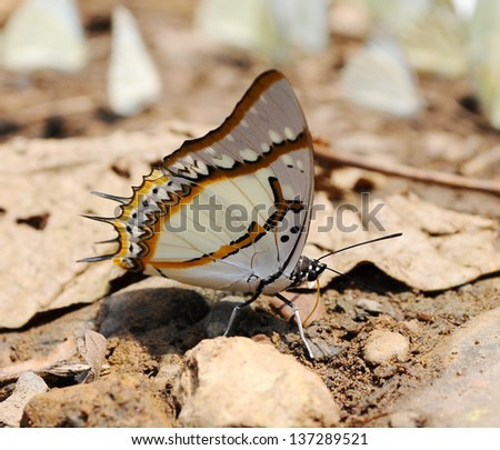 Beautiful butterfly on ground in nature
