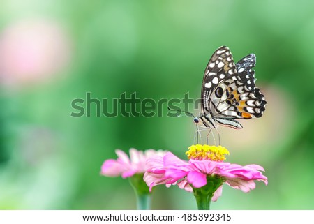 Beautiful butterfly on pink flower, Nature background.