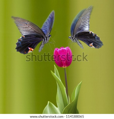 Beautiful butterfly on the flower for adv or others purpose use - stock photo