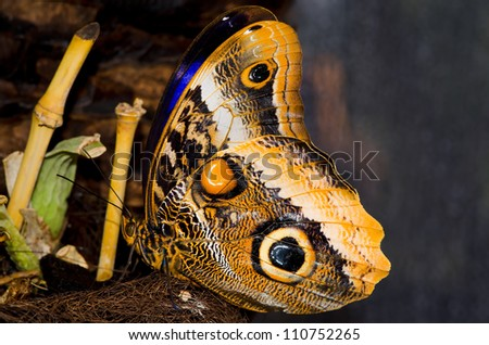beautiful butterfly sits with folded wings - stock photo