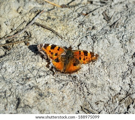 Beautiful butterfly sitting on ground - stock photo