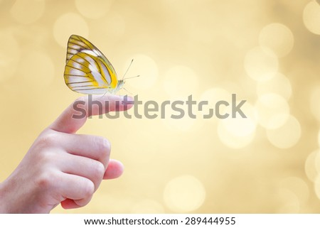 Beautiful butterfly sitting on the hand  - stock photo