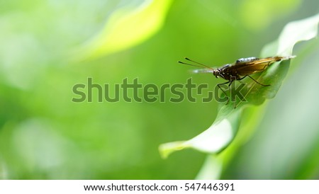 Beautiful butterfly with green nature background.