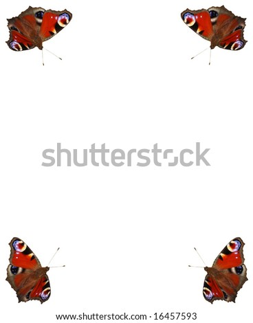Beautiful butterfly with white background - stock photo