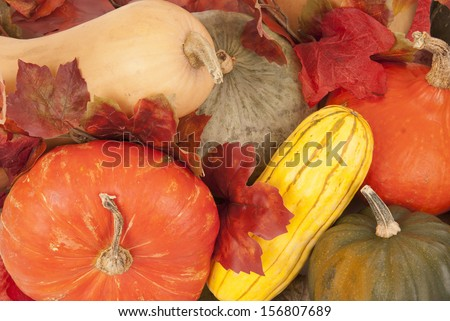 Beautiful butternut, acorn and other fall squash