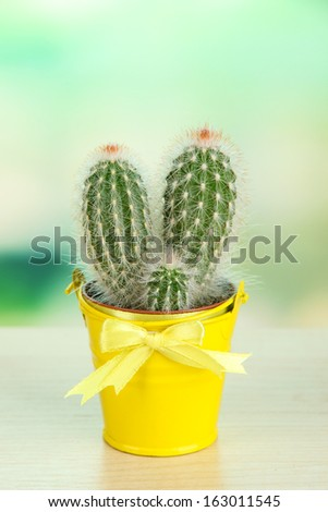 Beautiful cactus in bright pail on wooden table
