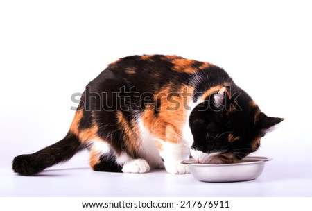 Beautiful calico cat eating out of a silver bowl, on white